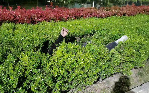 """金港大道路中央绿化带有一具""""尸体""""? 50岁扬中男子…"""